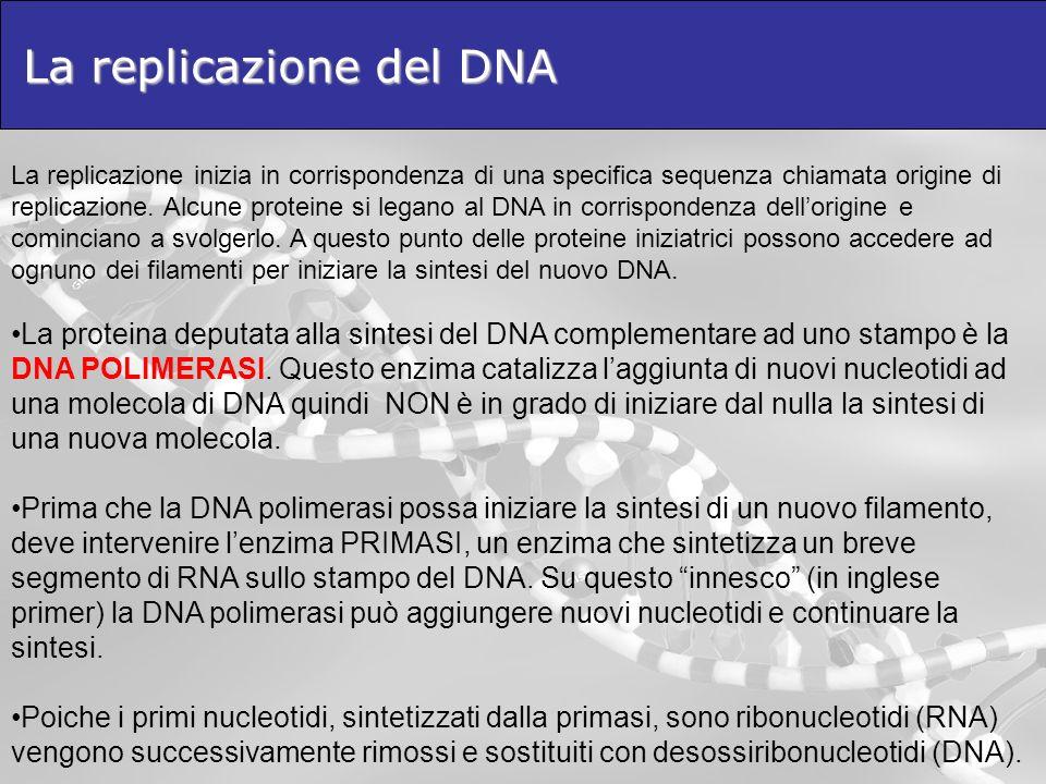 La replicazione del DNA La replicazione inizia in corrispondenza di una specifica sequenza chiamata origine di replicazione. Alcune proteine si legano