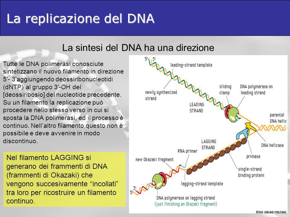 La replicazione del DNA Tutte le DNA polimerasi conosciute sintetizzano il nuovo filamento in direzione 5'- 3'aggiungendo deossiribonucleotidi (dNTP)