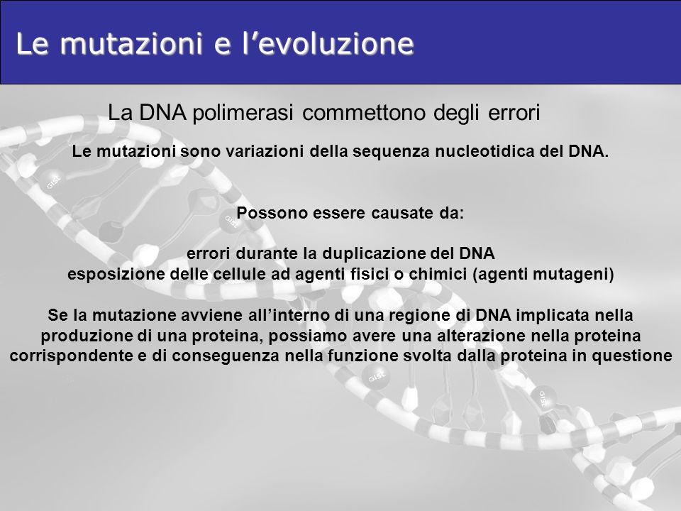 Le mutazioni e levoluzione Le mutazioni sono variazioni della sequenza nucleotidica del DNA. Possono essere causate da: errori durante la duplicazione