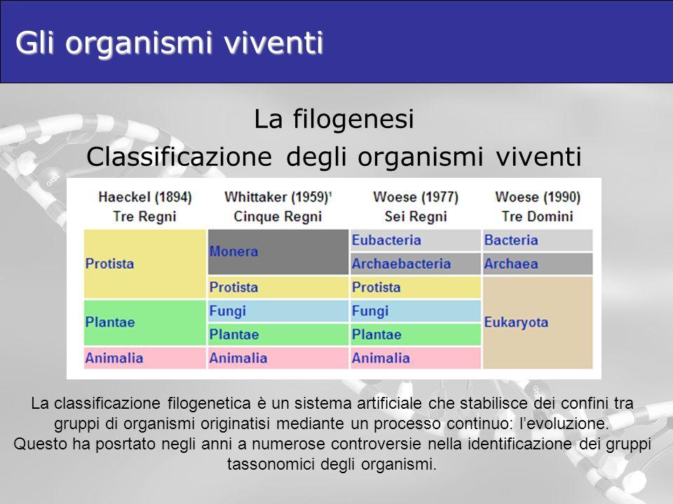 Gli organismi viventi La classificazione filogenetica è un sistema artificiale che stabilisce dei confini tra gruppi di organismi originatisi mediante