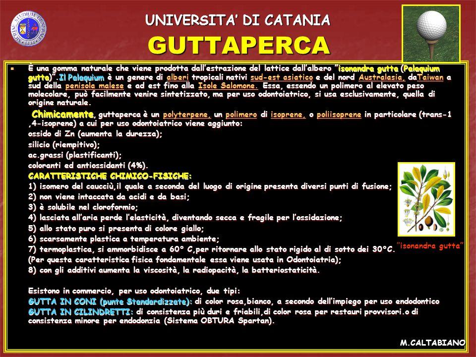 GUTTAPERCA È una gomma naturale che viene prodotta dallestrazione del lattice dallalbero isonandra gutta (Palaquium gutta).Il Palaquium è un genere di