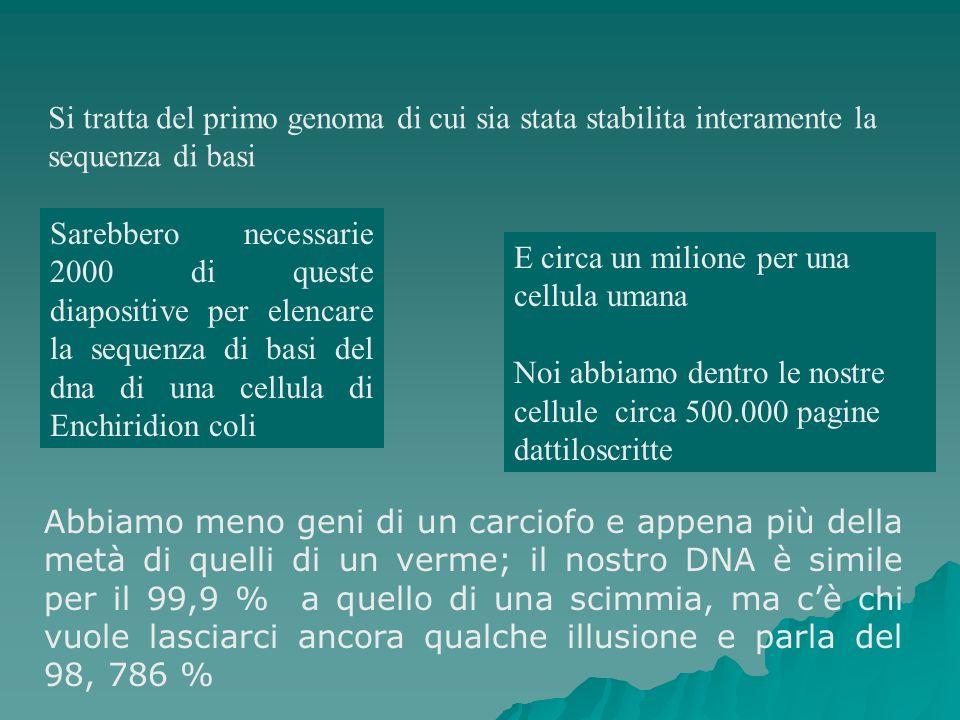 Si tratta del primo genoma di cui sia stata stabilita interamente la sequenza di basi Sarebbero necessarie 2000 di queste diapositive per elencare la