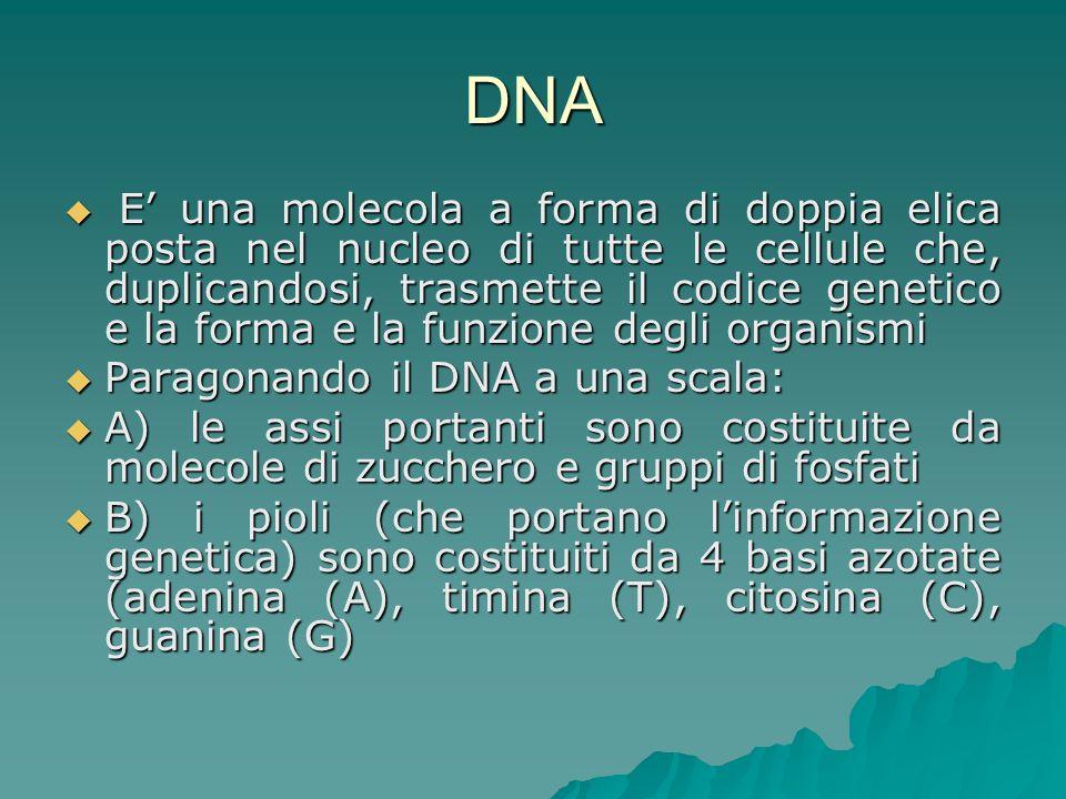 Tribunale di Bologna, ord.