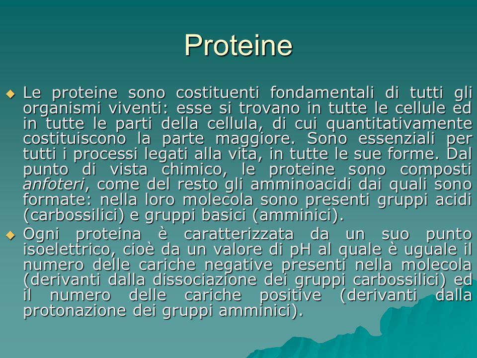 Proteine Le proteine sono costituenti fondamentali di tutti gli organismi viventi: esse si trovano in tutte le cellule ed in tutte le parti della cell