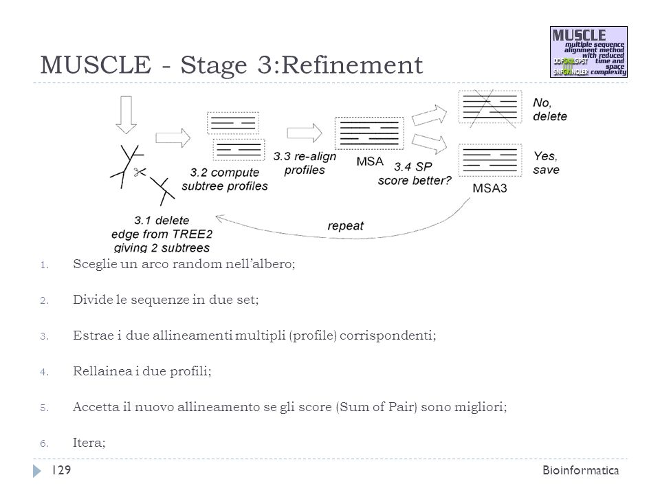 MUSCLE - Stage 3:Refinement 1. Sceglie un arco random nellalbero; 2. Divide le sequenze in due set; 3. Estrae i due allineamenti multipli (profile) co