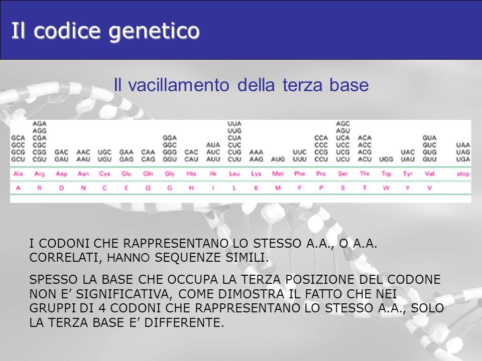 Il codice genetico Il vacillamento della terza base I CODONI CHE RAPPRESENTANO LO STESSO A.A., O A.A. CORRELATI, HANNO SEQUENZE SIMILI. SPESSO LA BASE