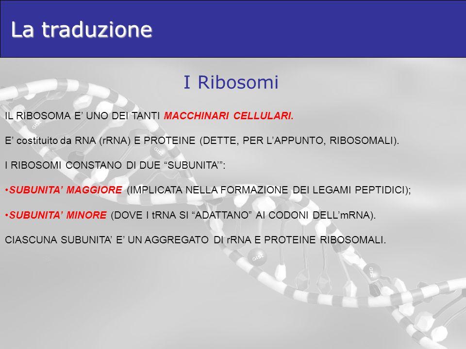 La traduzione I Ribosomi IL RIBOSOMA E UNO DEI TANTI MACCHINARI CELLULARI. E costituito da RNA (rRNA) E PROTEINE (DETTE, PER LAPPUNTO, RIBOSOMALI). I