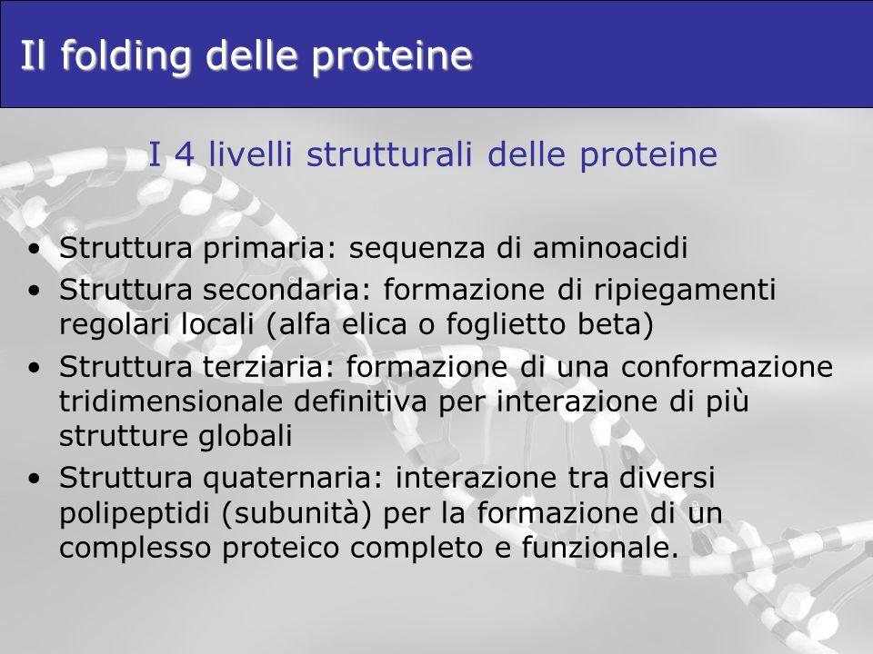 Il folding delle proteine I 4 livelli strutturali delle proteine Struttura primaria: sequenza di aminoacidi Struttura secondaria: formazione di ripieg