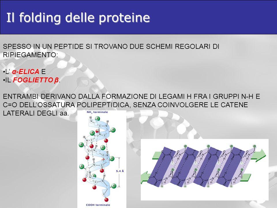 Il folding delle proteine SPESSO IN UN PEPTIDE SI TROVANO DUE SCHEMI REGOLARI DI RIPIEGAMENTO: L α-ELICA E IL FOGLIETTO β. ENTRAMBI DERIVANO DALLA FOR