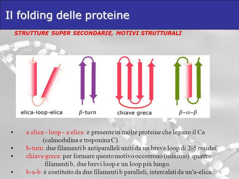 Il folding delle proteine STRUTTURE SUPER SECONDARIE, MOTIVI STRUTTURALI a elica - loop - a elica: è presente in molte proteine che legano il Ca (calm