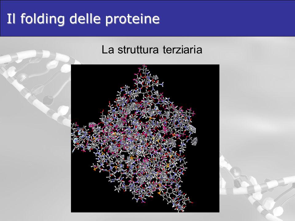 Il folding delle proteine La struttura terziaria