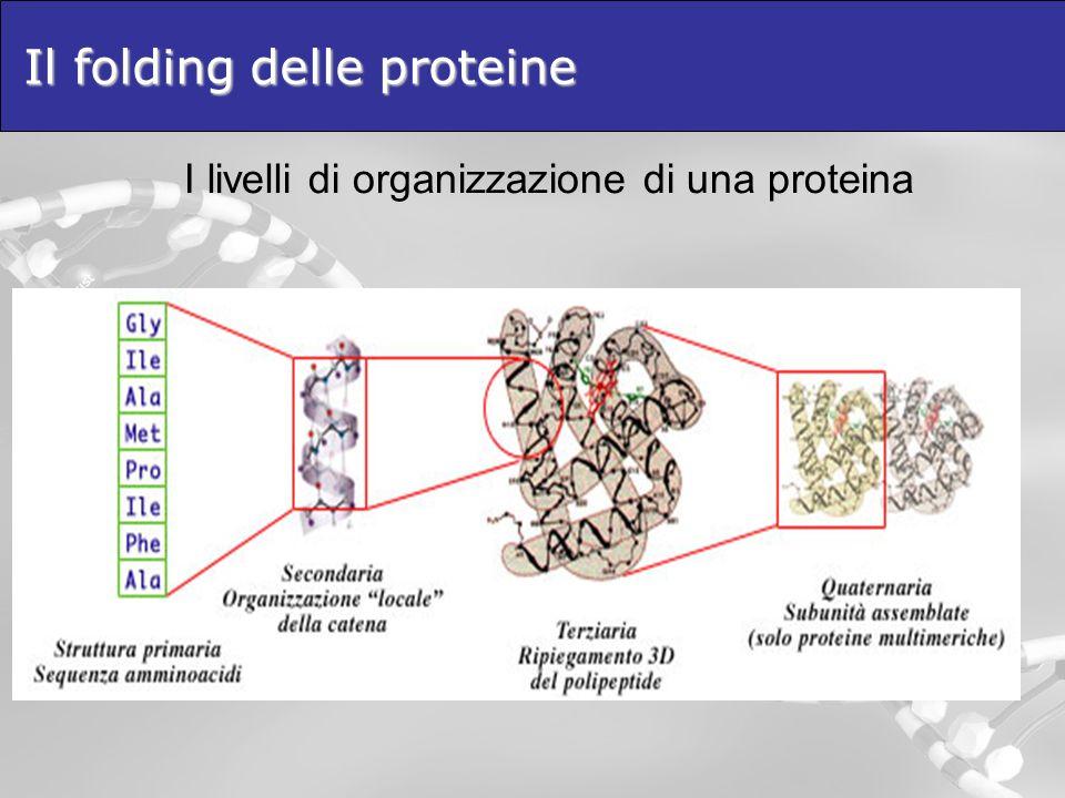 Il folding delle proteine I livelli di organizzazione di una proteina