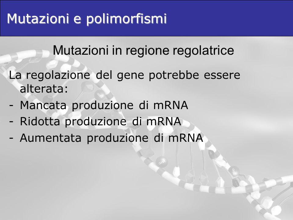 Mutazioni e polimorfismi La regolazione del gene potrebbe essere alterata: -Mancata produzione di mRNA -Ridotta produzione di mRNA -Aumentata produzio