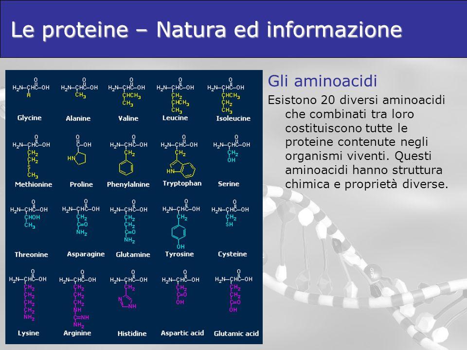 Le proteine – Natura ed informazione Gli aminoacidi Sulla base delle caratteristiche del loro gruppo R gli aminoacidi possono essere: Idrofobici Polari Acidi Basici Aromatici Piccoli Le interazioni tra gli aminoacidi, e quindi la struttura 3d finale della protena, saranno influenzate dalle caratteristiche chimiche degli stessi.