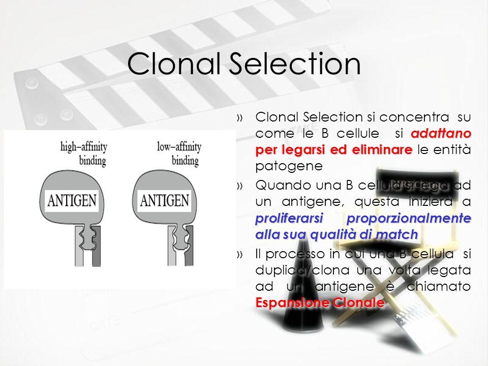 Clonal Selection adattano per legarsi ed eliminare »Clonal Selection si concentra su come le B cellule si adattano per legarsi ed eliminare le entità