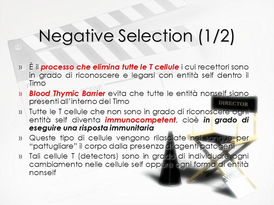 Negative Selection (1/2) processo che elimina tutte le T cellule »È il processo che elimina tutte le T cellule i cui recettori sono in grado di ricono