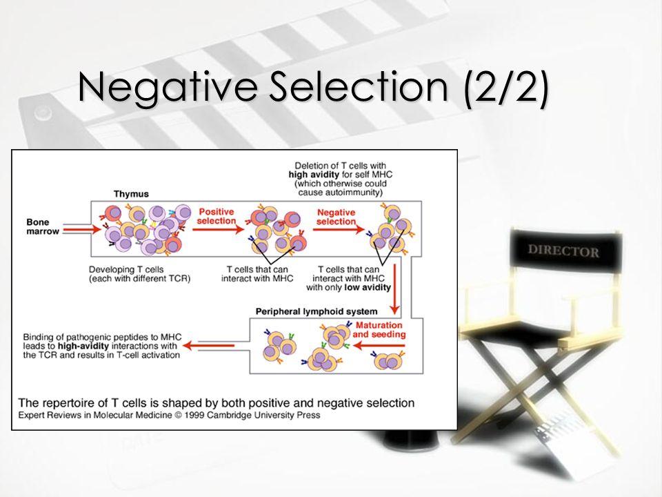 Negative Selection (2/2)