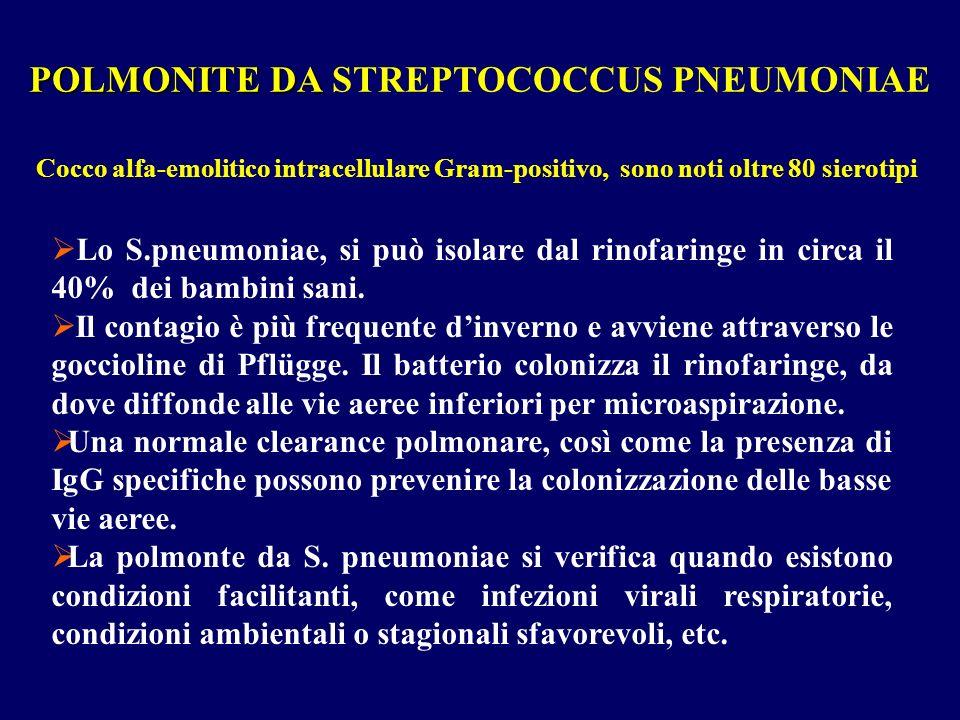 Lo S.pneumoniae, si può isolare dal rinofaringe in circa il 40% dei bambini sani. Il contagio è più frequente dinverno e avviene attraverso le gocciol