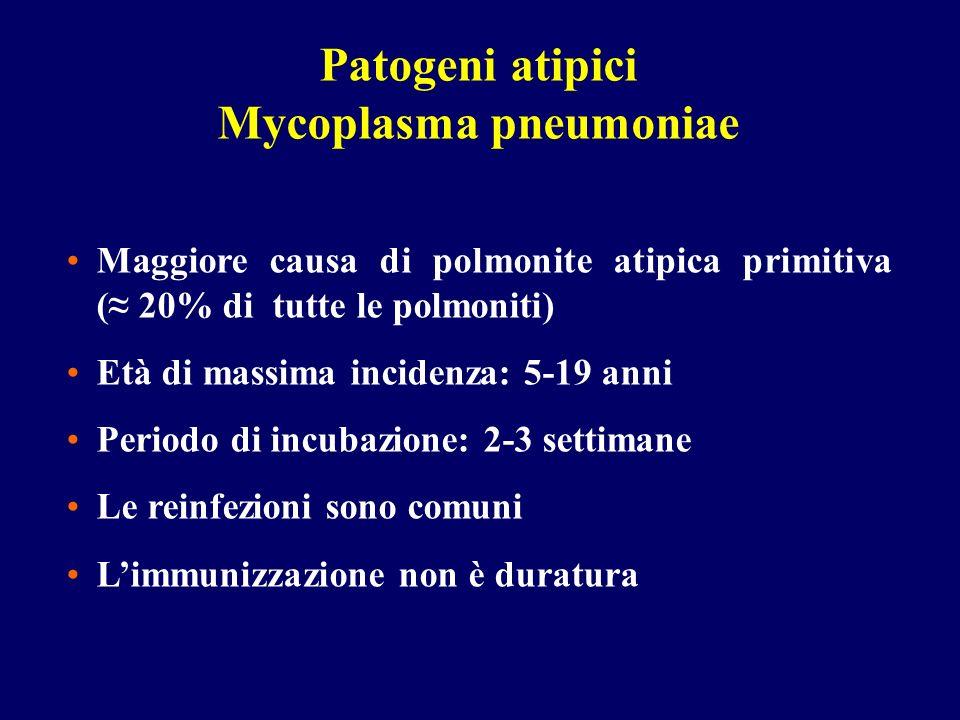 Maggiore causa di polmonite atipica primitiva ( 20% di tutte le polmoniti) Età di massima incidenza: 5-19 anni Periodo di incubazione: 2-3 settimane L