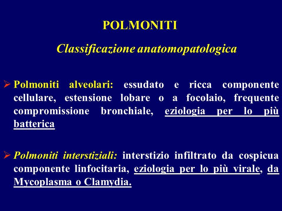 POLMONITI Polmoniti alveolari: essudato e ricca componente cellulare, estensione lobare o a focolaio, frequente compromissione bronchiale, eziologia p