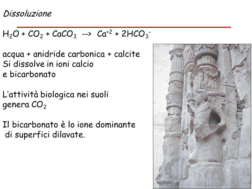 Dissoluzione H 2 O + CO 2 + CaCO 3 --> Ca +2 + 2HCO 3 - acqua + anidride carbonica + calcite Si dissolve in ioni calcio e bicarbonato Lattività biolog