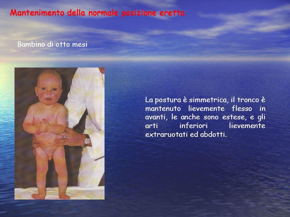 Mantenimento della normale posizione eretta Bambino di otto mesi La postura è simmetrica, il tronco è mantenuto lievemente flesso in avanti, le anche