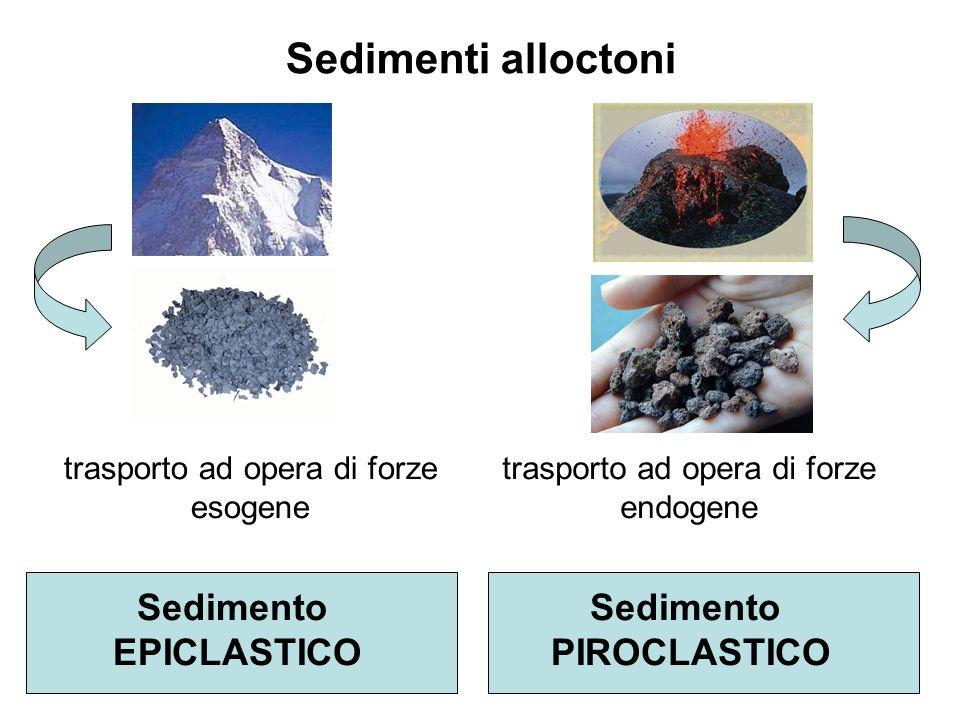 Sedimenti alloctoni trasporto ad opera di forze esogene Sedimento EPICLASTICO Sedimento PIROCLASTICO trasporto ad opera di forze endogene