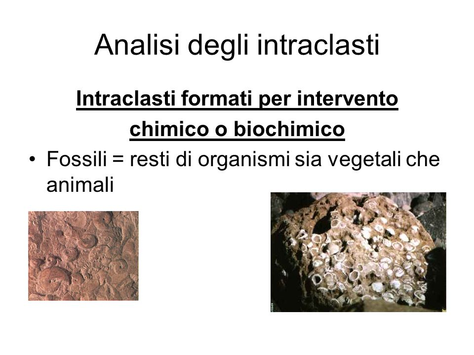 Analisi degli intraclasti Intraclasti formati per intervento chimico o biochimico Fossili = resti di organismi sia vegetali che animali