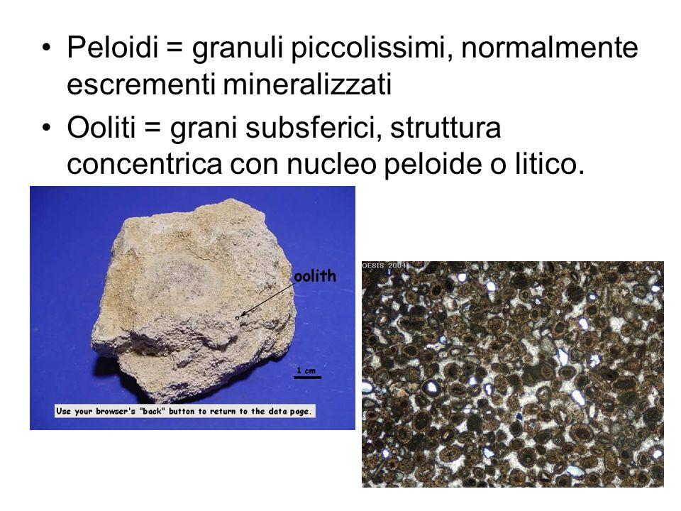 Peloidi = granuli piccolissimi, normalmente escrementi mineralizzati Ooliti = grani subsferici, struttura concentrica con nucleo peloide o litico.
