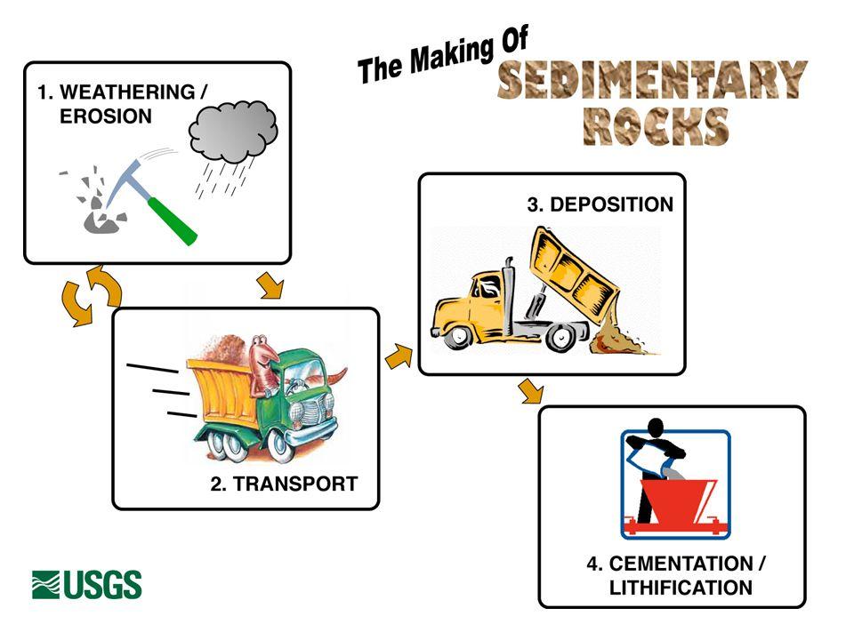 I sedimenti prodotti possono essere accumulati in ambiente marino o subaereo Essi consistono in frammenti di roccia, oppure in particelle di dimensioni molto piccole (ioni) Sono spesso presenti resti di organismi (piante ed animali) Possono essere formate da materiali derivanti da unattività vulcanica