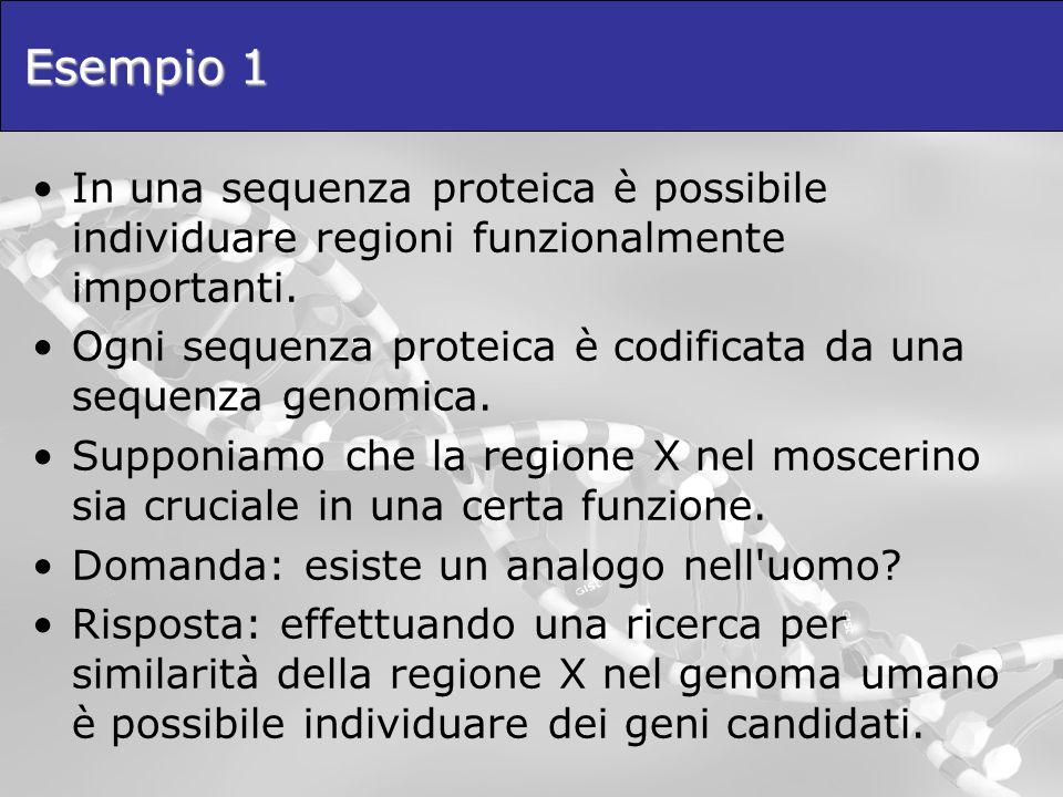 Esempio 1 In una sequenza proteica è possibile individuare regioni funzionalmente importanti. Ogni sequenza proteica è codificata da una sequenza geno