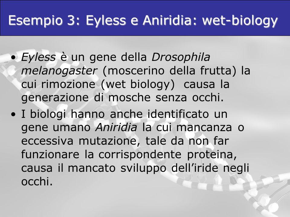 Esempio 3: Eyless e Aniridia: wet-biology Eyless è un gene della Drosophila melanogaster (moscerino della frutta) la cui rimozione (wet biology) causa