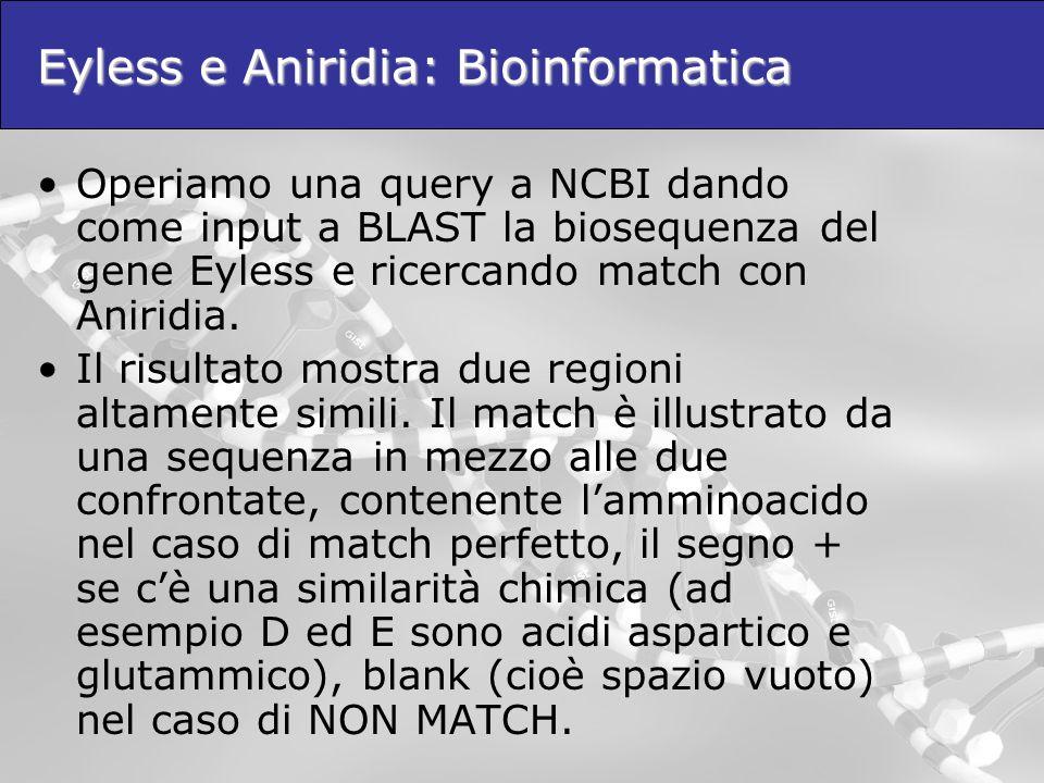 Eyless e Aniridia: Bioinformatica Operiamo una query a NCBI dando come input a BLAST la biosequenza del gene Eyless e ricercando match con Aniridia. I