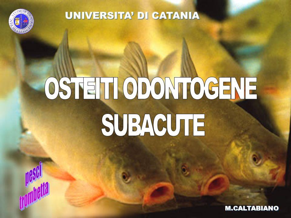 M.CALTABIANO UNIVERSITA DI CATANIA