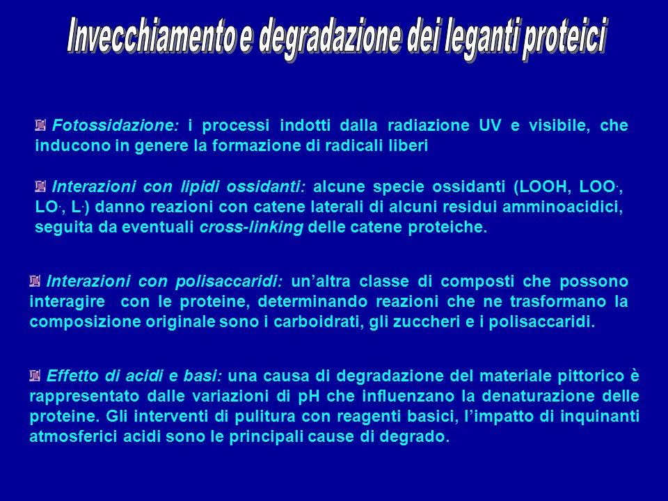 Fotossidazione: i processi indotti dalla radiazione UV e visibile, che inducono in genere la formazione di radicali liberi Interazioni con lipidi ossi