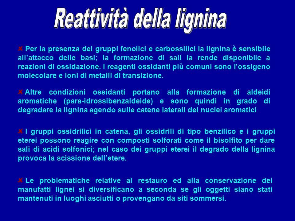 Per la presenza dei gruppi fenolici e carbossilici la lignina è sensibile allattacco delle basi; la formazione di sali la rende disponibile a reazioni