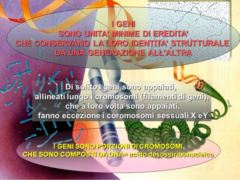 PERIODO DI MASSIMO RISCHIO TERATOGENO: PRIMI 2,5 - 3 MESI