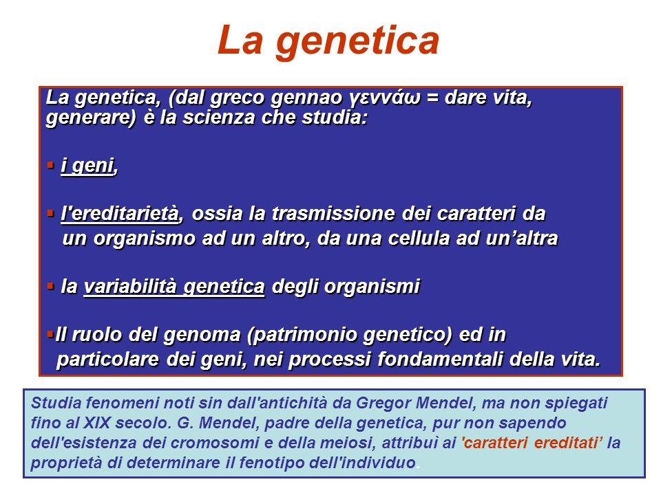 Applicazioni pratiche della genetica 1.La ricerca genetica ci aiuta a capire lo sviluppo, la biologia della cellula, la fisiologia, ecc 2.