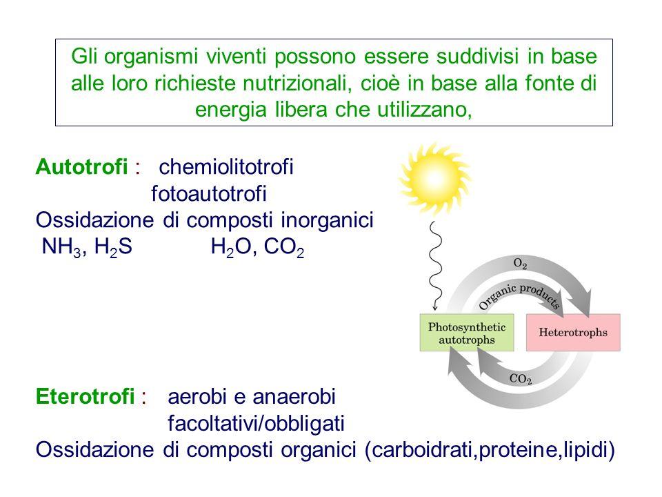 Gli organismi viventi possono essere suddivisi in base alle loro richieste nutrizionali, cioè in base alla fonte di energia libera che utilizzano, Aut