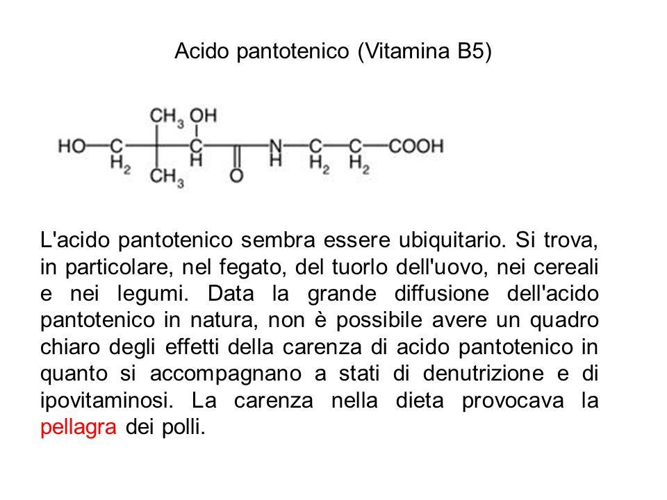 Acido pantotenico (Vitamina B5) L'acido pantotenico sembra essere ubiquitario. Si trova, in particolare, nel fegato, del tuorlo dell'uovo, nei cereali