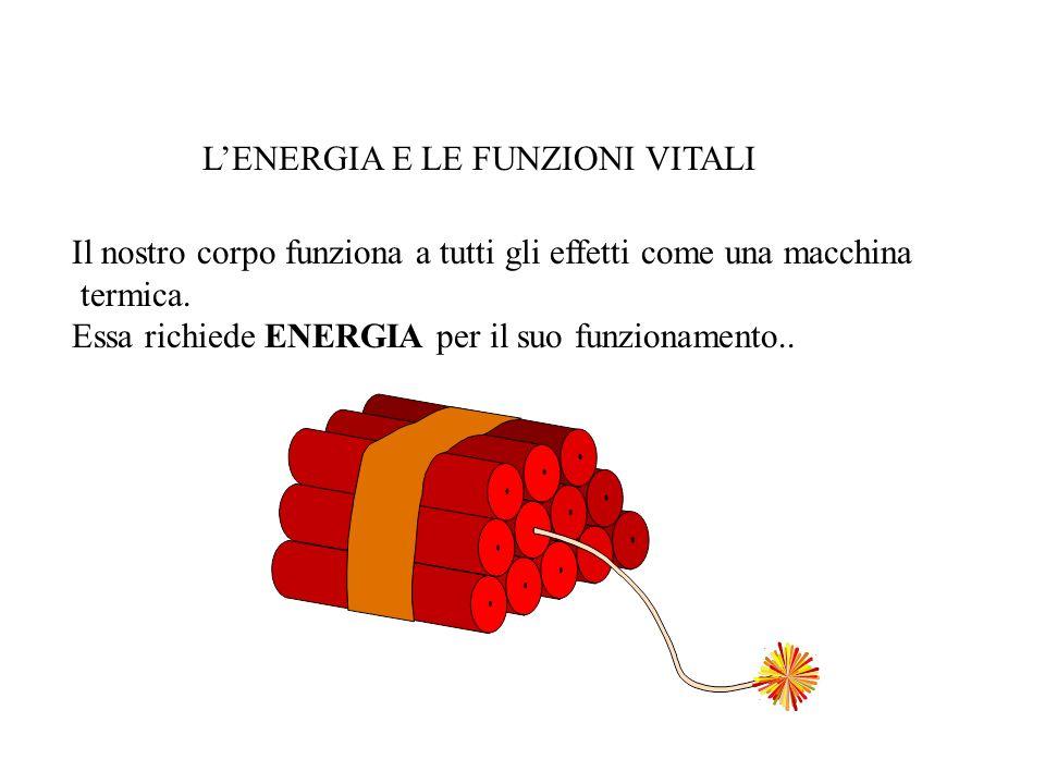Il nostro corpo funziona a tutti gli effetti come una macchina termica. Essa richiede ENERGIA per il suo funzionamento.. LENERGIA E LE FUNZIONI VITALI