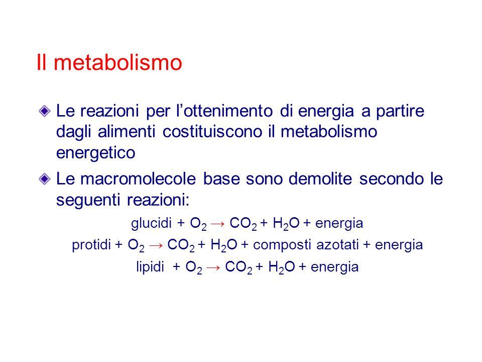 Il metabolismo Le reazioni per lottenimento di energia a partire dagli alimenti costituiscono il metabolismo energetico Le macromolecole base sono dem