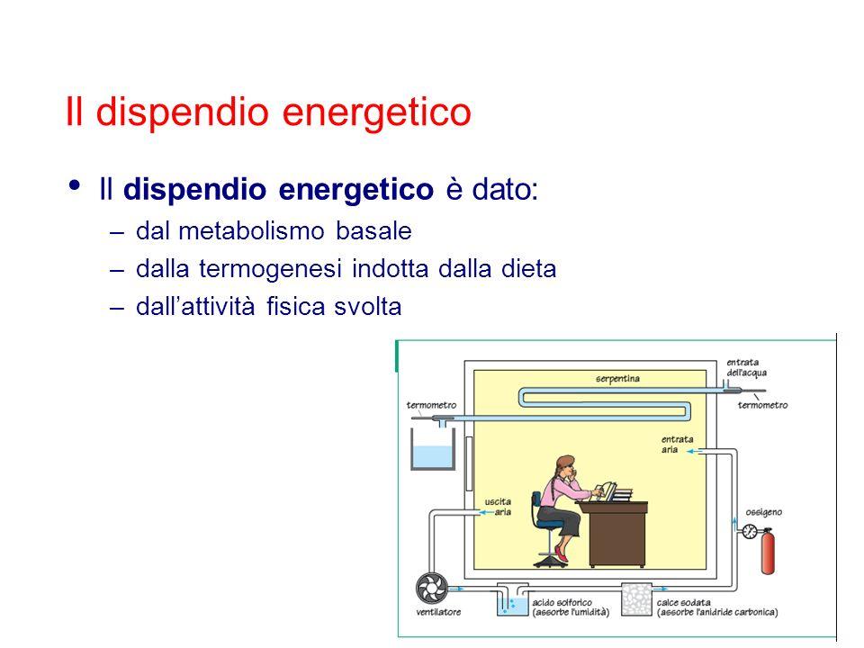 Il dispendio energetico è dato: –dal metabolismo basale –dalla termogenesi indotta dalla dieta –dallattività fisica svolta Il dispendio energetico