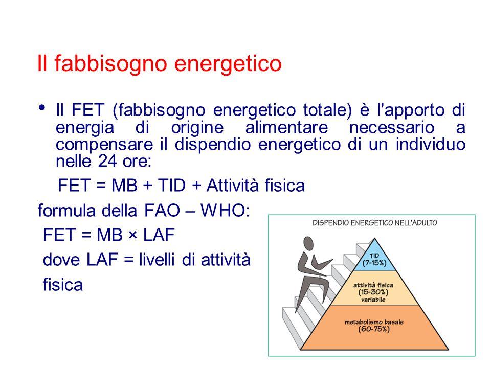 Il FET (fabbisogno energetico totale) è l'apporto di energia di origine alimentare necessario a compensare il dispendio energetico di un individuo nel