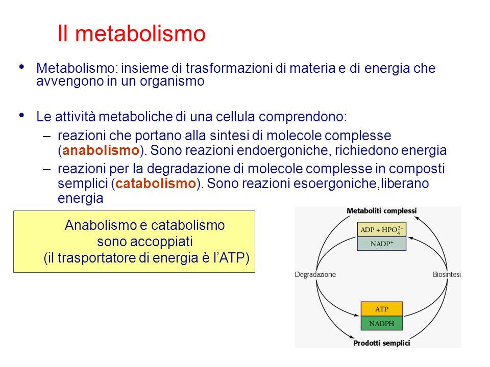 Metabolismo: insieme di trasformazioni di materia e di energia che avvengono in un organismo Le attività metaboliche di una cellula comprendono: –reaz