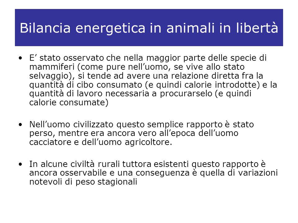 Bilancia energetica in animali in libertà E stato osservato che nella maggior parte delle specie di mammiferi (come pure nelluomo, se vive allo stato