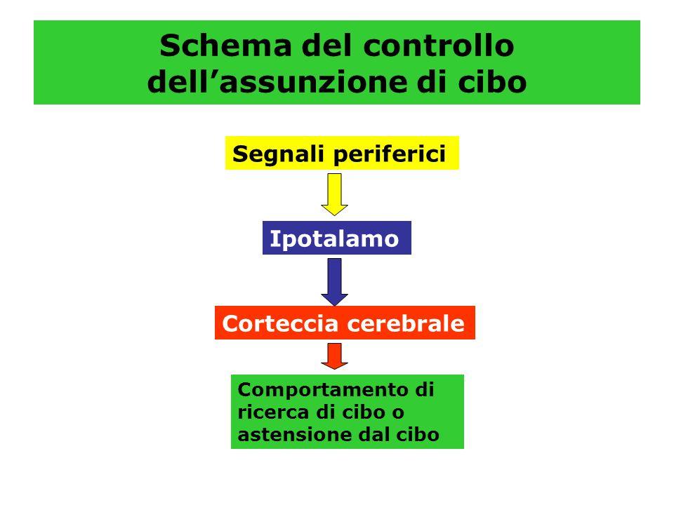 Schema del controllo dellassunzione di cibo Segnali periferici Ipotalamo Corteccia cerebrale Comportamento di ricerca di cibo o astensione dal cibo