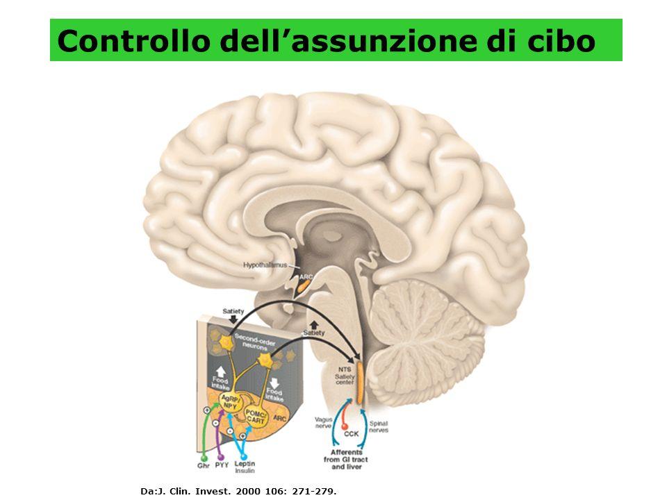 Controllo dellassunzione di cibo Da:J. Clin. Invest. 2000 106: 271-279.