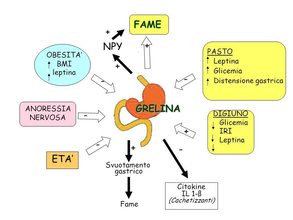 NPY Svuotamento gastrico Citokine IL 1-ß (Cachetizzanti) Fame + - + + - - - - GRELINA DIGIUNO Glicemia IRI Leptina PASTO Leptina Glicemia Distensione