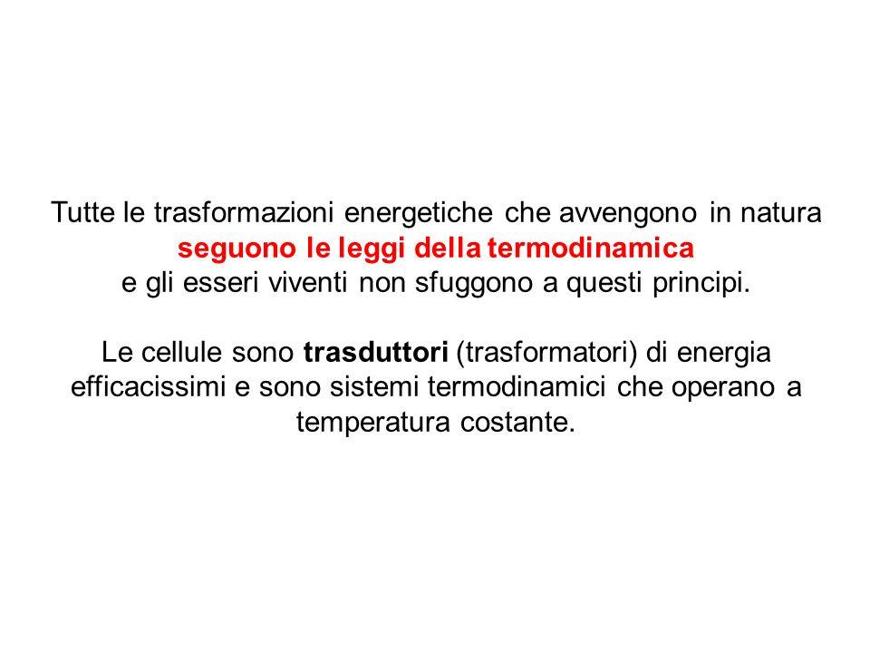 Tutte le trasformazioni energetiche che avvengono in natura seguono le leggi della termodinamica e gli esseri viventi non sfuggono a questi principi.